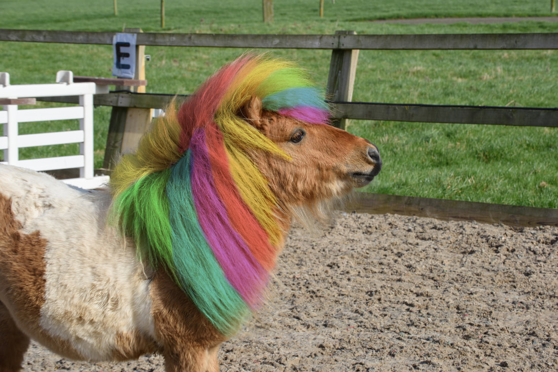 Pony Parties - A colourful pony mane