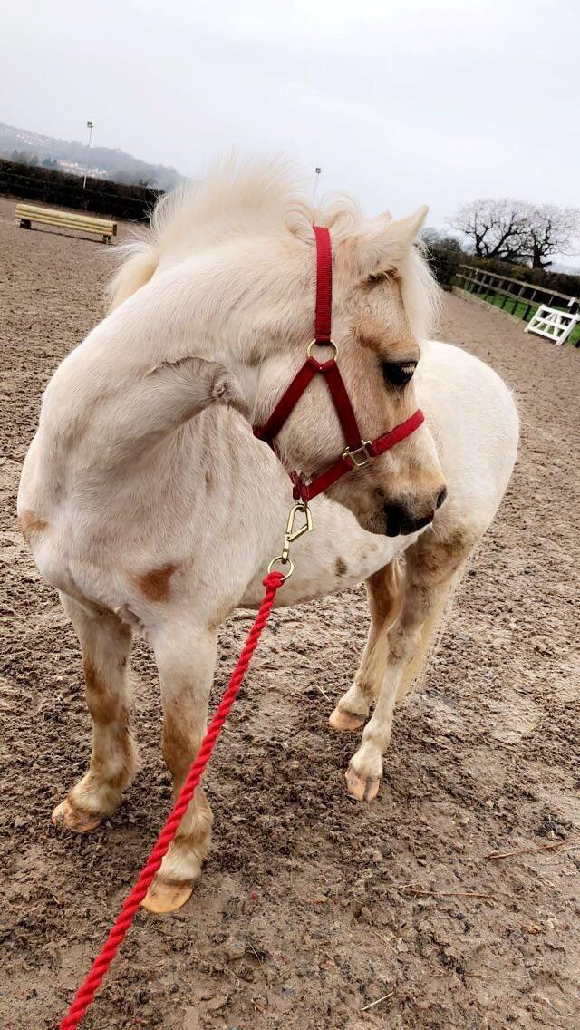 Pony Parties - Our pony Buzz